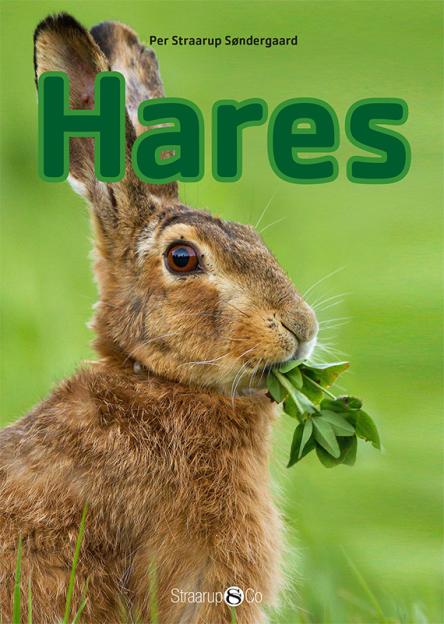 Hares - Maneno