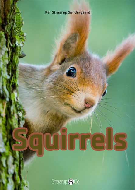 Squirrels - Maneno