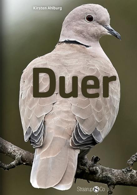 Duer - Maneno