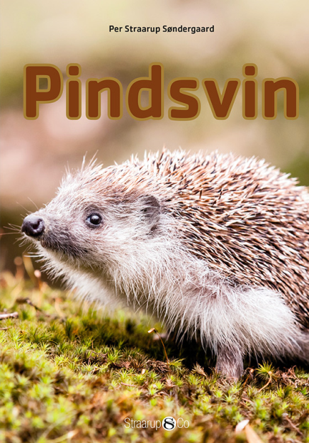 Pindsvin - Maneno
