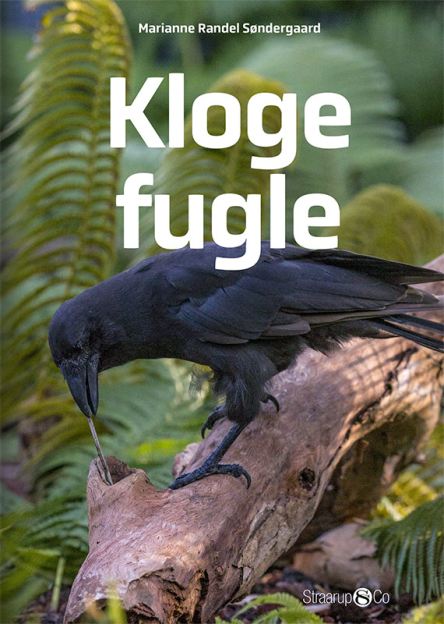 Kloge fugle - Maneno - 10902